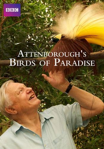 BBC: Райские птицы с Дэвидом Аттенборо / Attenborough's Paradise Birds (2015) HDTVRip [H.264/1080p-LQ] [EN / RU, EN Sub]