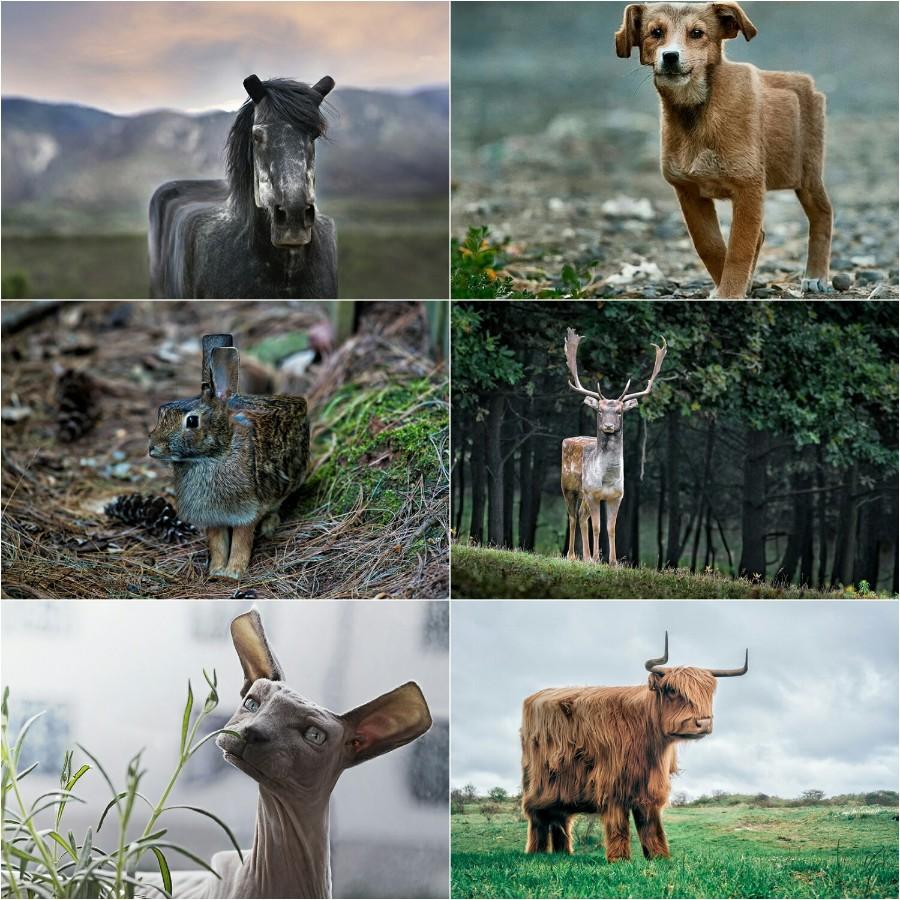 Животные майнкрафта