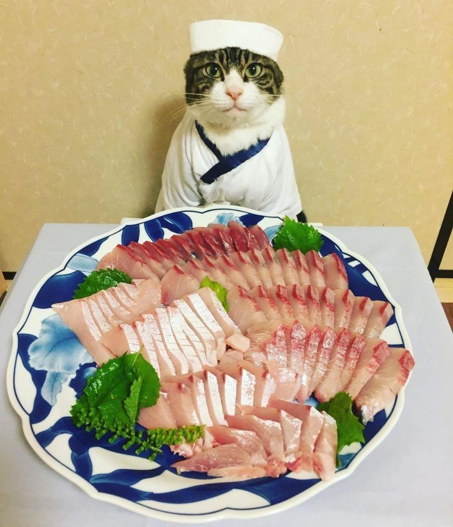 Японский шеф повар