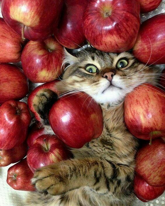 Котейка в яблоках