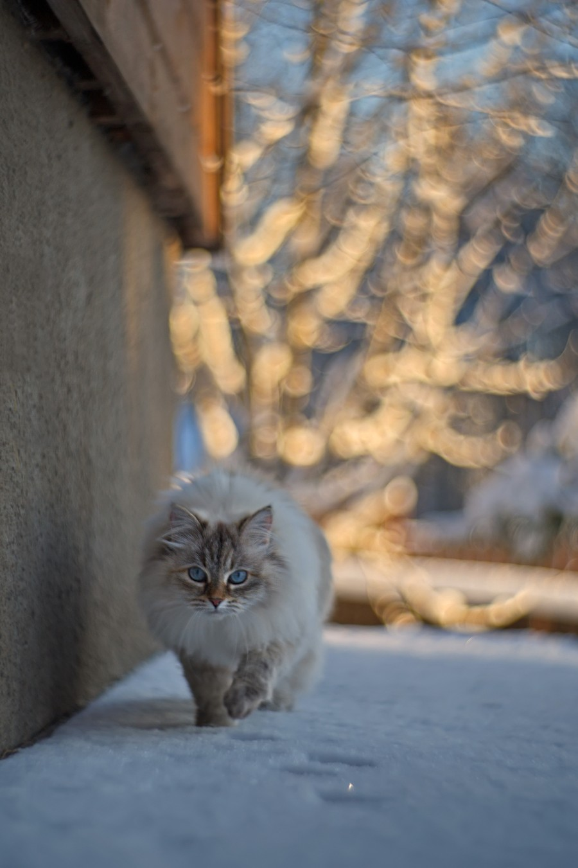 Зимний котейка
