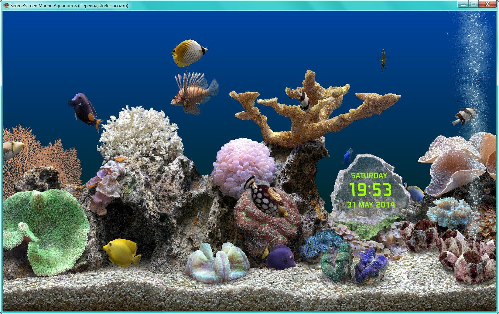Marine Aquarium [3.3.6341] (2018/PC/Русский), RePack by elchupacabra