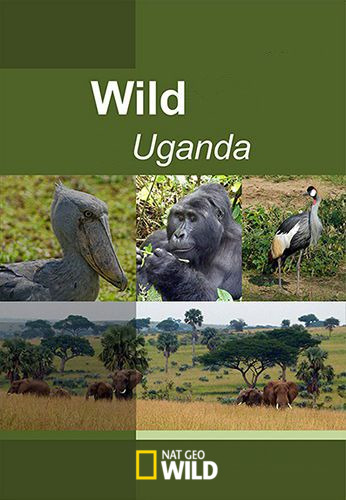 NGW: TerraMater / Дикая природа Уганды / Wild Uganda (2018) WEB-DLRip [H.264] [MP4|1280x720]