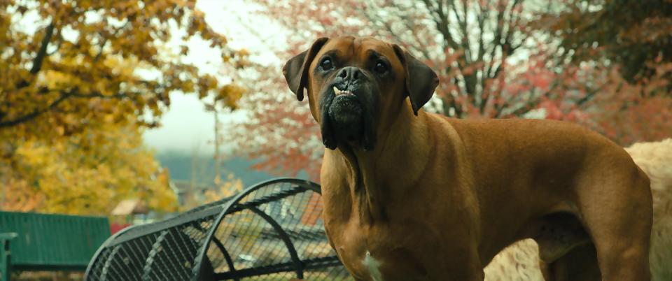 A Dog's Way Home.mkv_snapshot_00.36.46.413.png