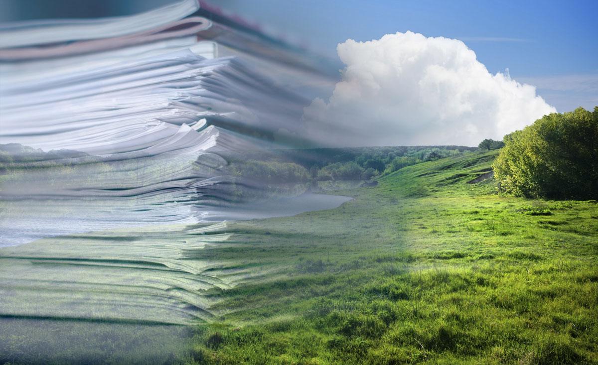 разработка программы экологического контроля