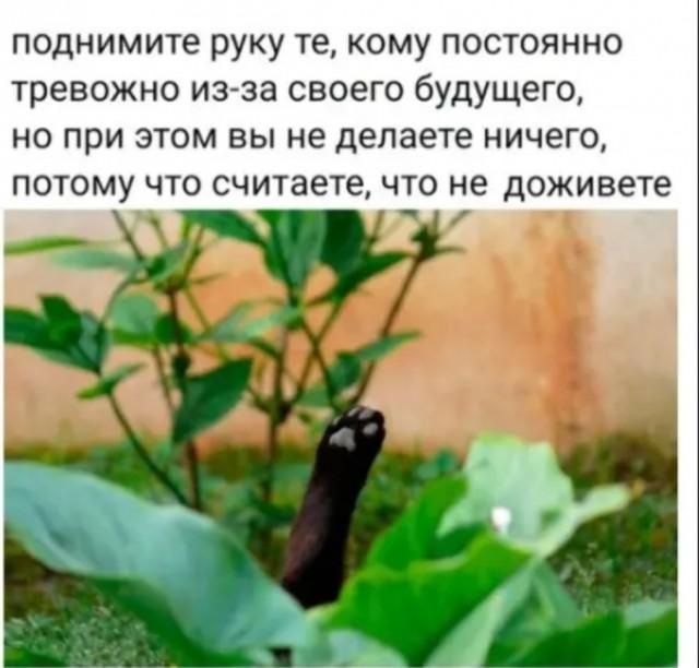 https://i1.imageban.ru/out/2020/09/01/fafaf9a71d93c3b3a235f7b2835ebc99.jpg