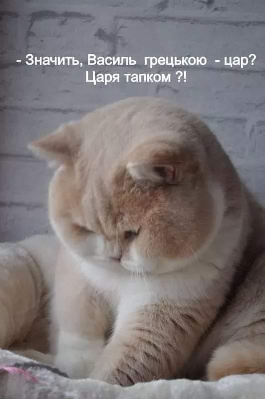 https://i1.imageban.ru/out/2021/01/17/debd67132b95e8762225d66532414cad.jpg