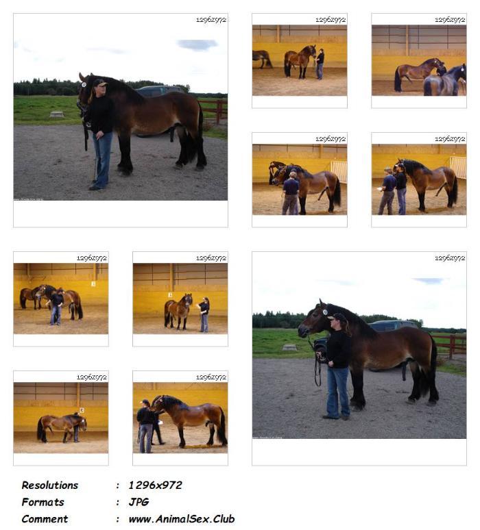 2ba384b8d6a1790198b1dc727031bb05 - Draft Horse Stallion Show - 58 Pics - Animal Sex Genitals Pictures