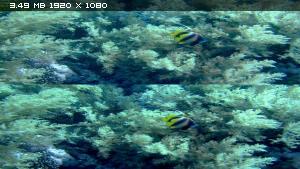 Большое путешествие вглубь океанов в 3Д / OceanWorld 3D Вертикальная анаморфная