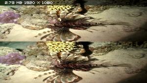 Цирк океана: Вокруг света под водой в 3Д / Ocean Circus 3D: Underwater Around the World 3D Вертикальная анаморфная