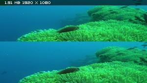 Коралловый риф - Том 2: Таинственный мир под водой в 3Д / Faszination Korallenriff - Vol.2: Fremde Welten Unter Wasser3D Вертикальная анаморфная