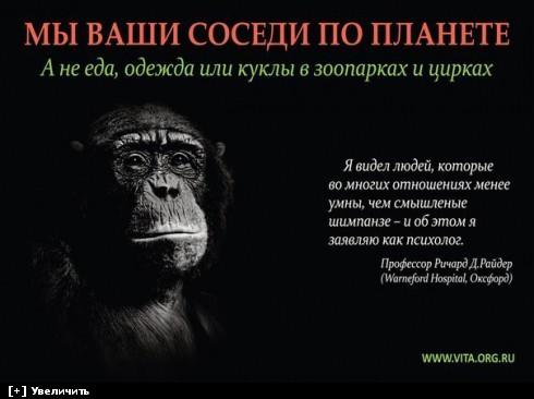 https://i1.imageban.ru/thumbs/2013.10.11/fab7d73c5d57a28ab6cc461cec536673.jpg