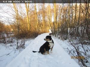 http://i1.imageban.ru/thumbs/2015.12.17/5e4a3ffa0e5714d942d0c829db4fd3c9.jpg