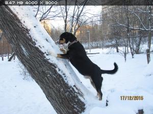 http://i1.imageban.ru/thumbs/2015.12.17/ef40670e571b2b31b284528c84e6175e.jpg
