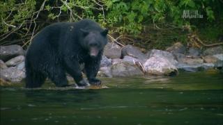 Неизведанные острова / Animal Planet: Wildest Islands [01-10] (2012-2013) HDTV 1080i | D