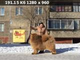 https://i1.imageban.ru/thumbs/2020.06.03/ff7c3e76db5799fa6d16cb69b02d9766.jpg
