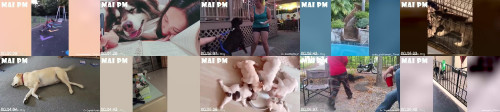 5fcdf95e036175dc5d9aaca22c61a748 - Try Not To Laugh While Watching Funny Dogs Video - Dog's Life Is Comedy