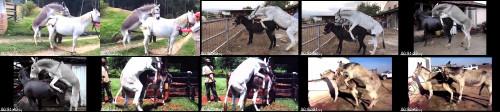 c9a8b83a07f3aac1b0e7657e6c9ef1ec - Horse Mating Donkey - Donkeys Breeding - Animals Mating Compilation