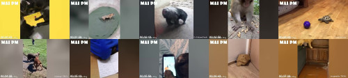 e1a4eef6d827f04b8c9f034f1106d827 - Laughing All Long Day With Funny Animals Video - Funniest Animal's Life
